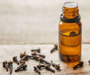 khasiat minyak cengkeh